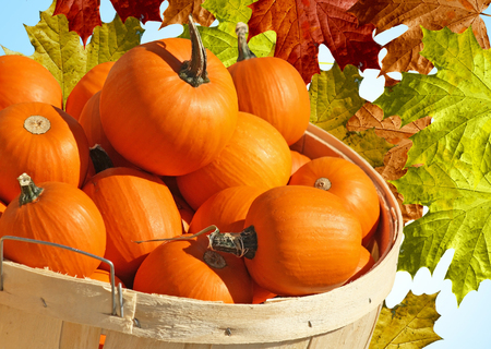 pumpkin pie: Bushel Basket of Pumpkin Minis with abstract Autumn Leaves background Stock Photo