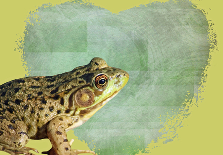 prince charming: Green Frog sitting in front of a heart shaped Valentine