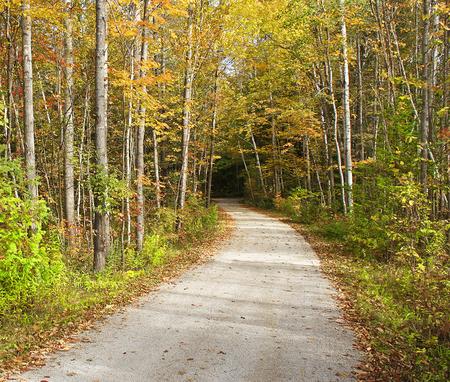 feuille arbre: sentier de randonnée Secluded aller dans les bois. Beaux arbres aux couleurs d'automne de jaune, ligne verte et or le chemin