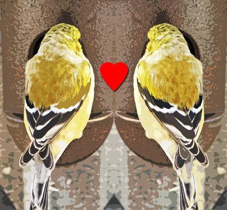 bird feeder: Two Finches meet at a bird feeder and find LOVE