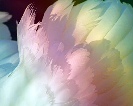 swans: Soft textured Swan feathers with Rainbow colors Stock Photo