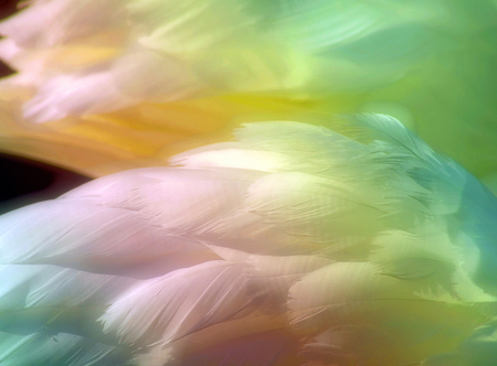 soft colors: Beautiful swan feathers colored with Rainbow pastels with a soft glow Stock Photo