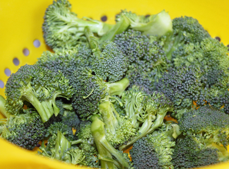 florets: Fresh Organic broccoli florets in colander after rinsing Stock Photo