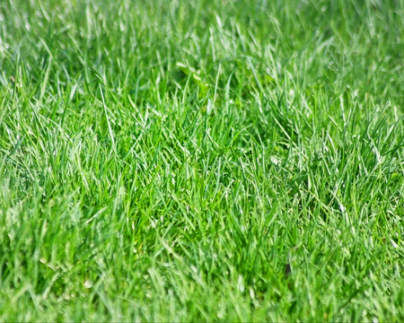 Healthy green lawn without the use of pesticides