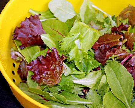 Healthy organic Spring Mix lettuce leaves after rinsing in colander Standard-Bild - 119792863