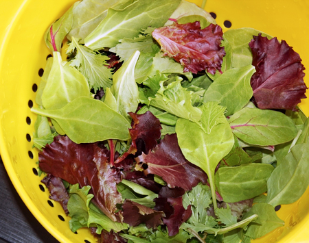Healthy organic Spring Mix lettuce leaves after rinsing in colander