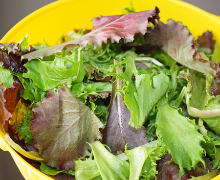 A Spring Mix of fresh organic greens in a yellow colander