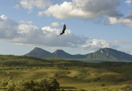Bird flying in a beautiful valley of Pão de Açúcar village, Alagoas, Brazil