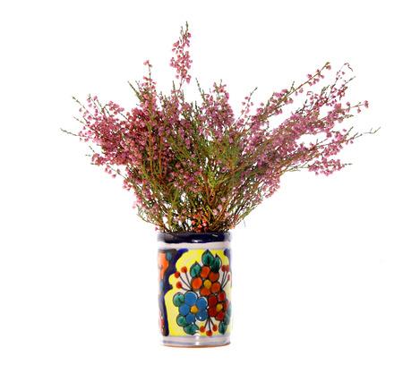 vulgaris: heather calluna vulgaris herb