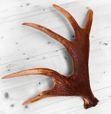 cuernos: cuernos de venado cuernos alces madera Foto de archivo