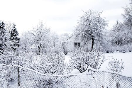 fense: different winter trees under snow on frosty days