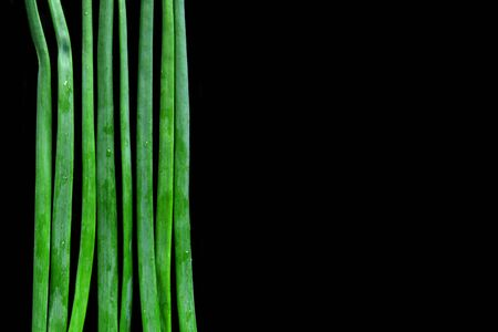 the greens: fresh wet onion greens isolated on black bacground