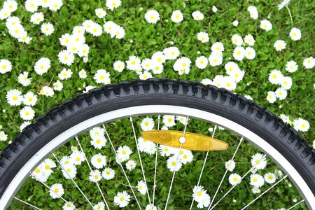 white daisies: bicycle wheel on green meadow background with white daisies