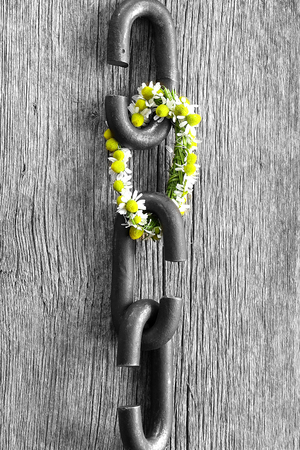 proverb: a chain is only as strong as its weakest link proverb one link made of flowers Stock Photo