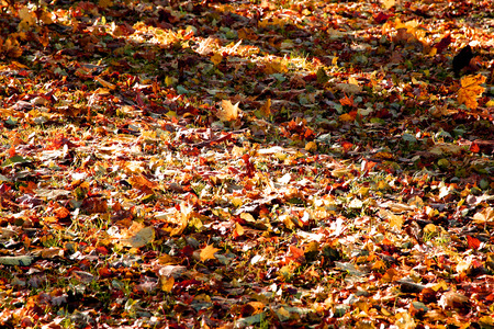 lighted: colored bright autumn leaves on ground in morning forest lighted by sun through trees
