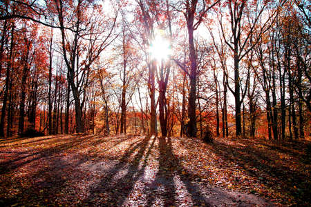 rise fall: autumn morning in forest with sun rising through trees