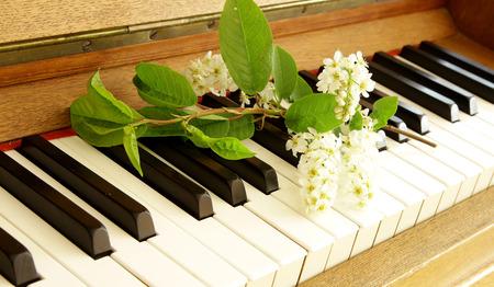 ebony: vintage piano keyboard with spring bird cherry tree flower branch ebony and ivory