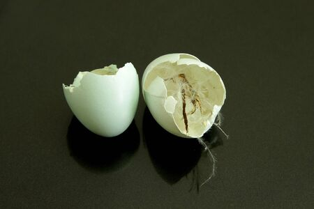 placenta: thrush blue eggshell two halves after just hatched newborn bird