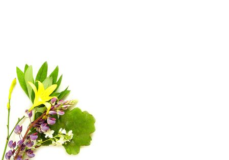 shortest: solstice midsummer herbs flowers on white background Stock Photo