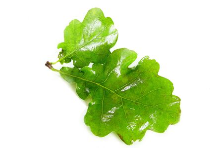 shortest: solstice midsummer oak leaves