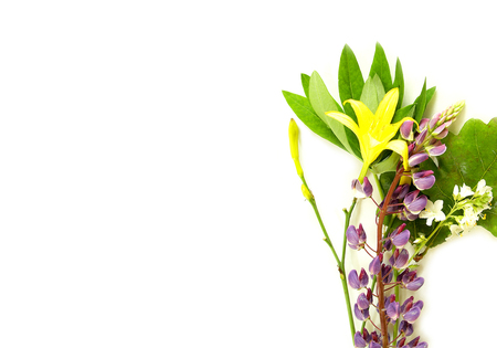 solstice midsummer herbs flowers on white background Stock Photo