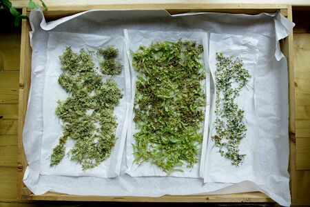 medical homeopathic herbs drying linden flowers camomile and Hypericum perforatum Stock Photo