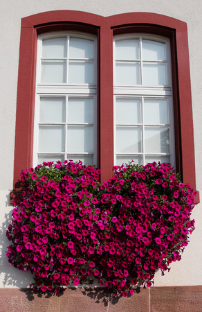 sumptuous: Window with petunias cascading from a flower box Stock Photo