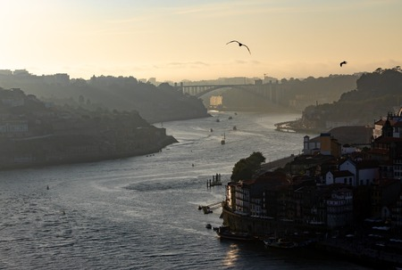 A late afternoon view of the Douro River in Porto, with seagulls flying by.