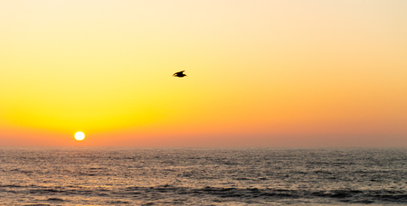 A single seagull flies above the ocean while the sun set in the horizon.