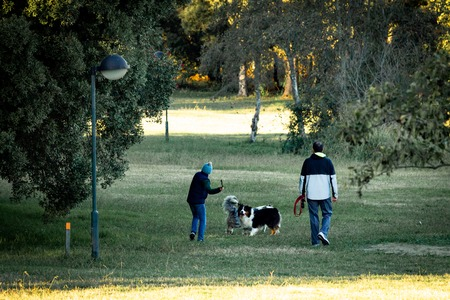 A child throws a stick at two dogs with his father nearby in the park. Back View.