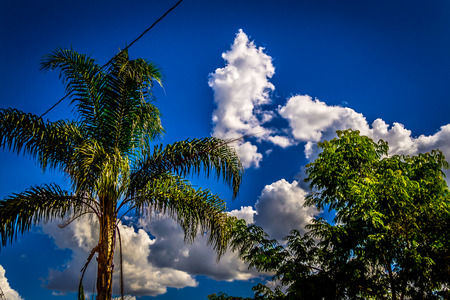 crocket: palm tree with blue sky and beautiful clouds
