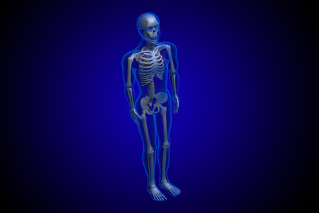 3d rendered Skeleton on a blue background photo