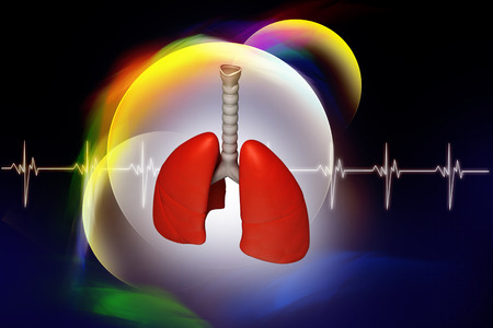 vital: Digital illustration of lungs in coloured background