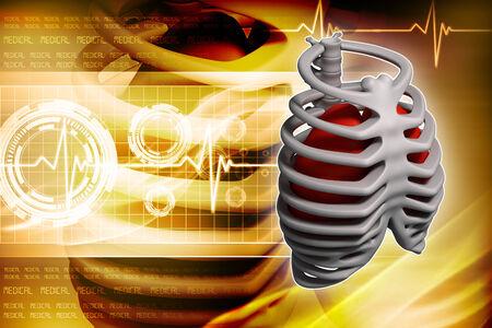 rib cage: Illustration of the rib cage Stock Photo