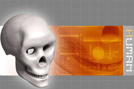 radiography: Human skull