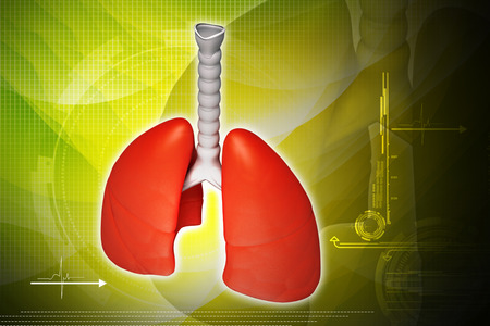 lobe: Digital illustration of lungs in coloured background