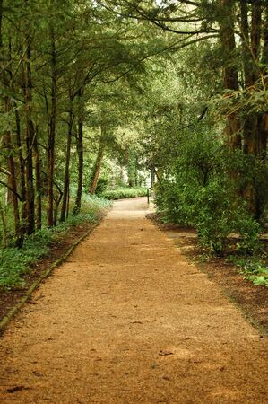 Dirt path leading through the woods photo