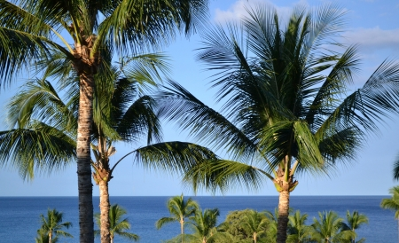 Palm Trees in Hawaii Stock Photo - 17311109