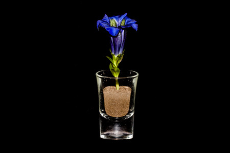 Closeup of Gentian In Glass On Black Background