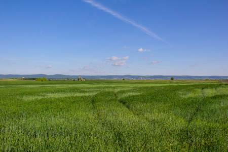 Beautiful Landscape Green Barley Blue Sky Stock Photo - 40549542