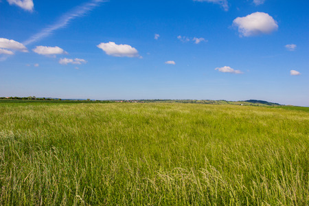 Beautiful Landscape Green Barley Blue Sky