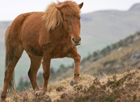 coldblooded: Wild brown horse