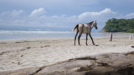 Adorable wild horse at the beach enjoying the moment 免版税图像