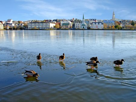Reykjavik, Iceland - Ducks walking on thin ice in the centre of Reykjavik. Stock Photo
