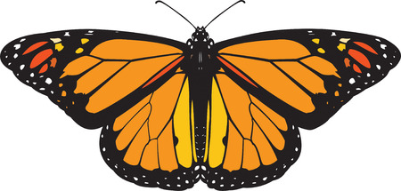 mariposas amarillas: Mariposa monarca vector
