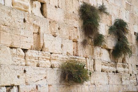 lamentation: Primo piano della parete occidentale. Gerusalemme. Israele. Archivio Fotografico