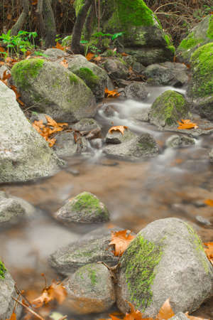 river stream in a mountain forest on an autumn day