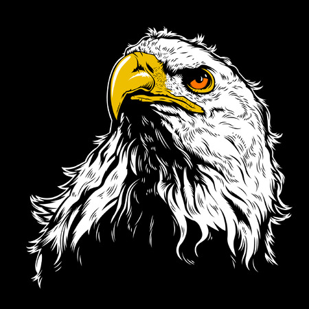 White Eagle Head Illustration