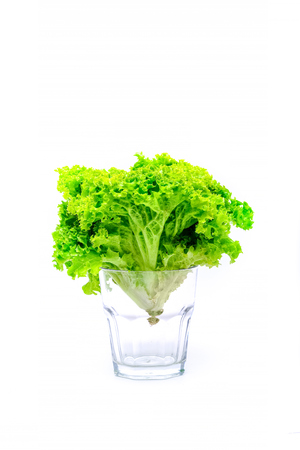 Fresh bush of lettuce salad in bowl on white backgroundBush green salad. in a glass.