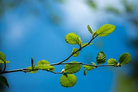 Green twig on a background of blue sky. The concept of spring and new life. Reklamní fotografie